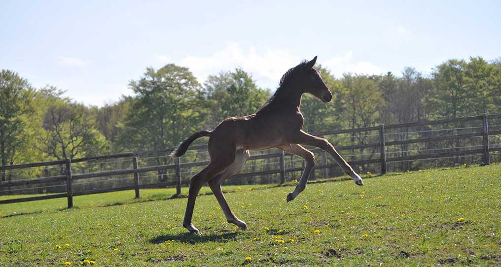 Stutteri EVO Foal Academy - D'Avinni